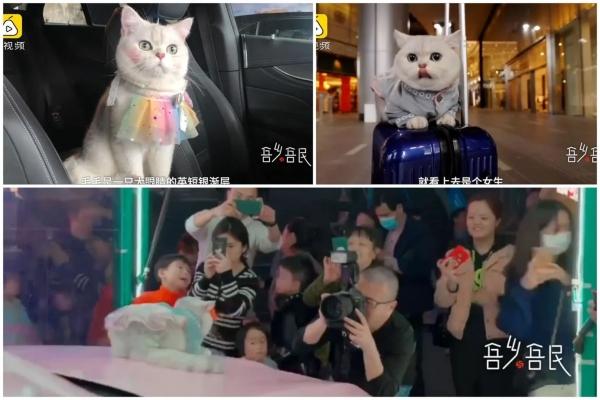 Mačka koja zarađuje ogromne pare svom vlasniku kao auto model